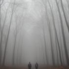 Foggy Winter Hike