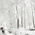Winter Wonder on Čierna Skala